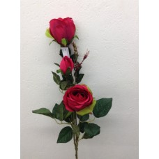 Roos, plant, 85 cm, 2 bloemen, 1 knop, fuchsia