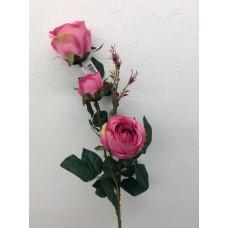 Roos, plant, 85 cm, 2 bloemen, 1 knop, hot pink