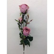 Roos, plant, 85 cm, 2 bloemen, 1 knop, mauve