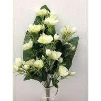 Roos, halfstruik, 50 cm, 12 bloemen, 24 bloemknoppen, cream